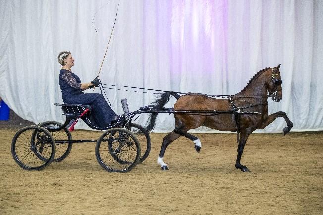 Novice Pony of the Year - Noddyvyse I'm The Boss & Sue Barraclough